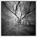 Mildly dead oak #3 by Eirik0304