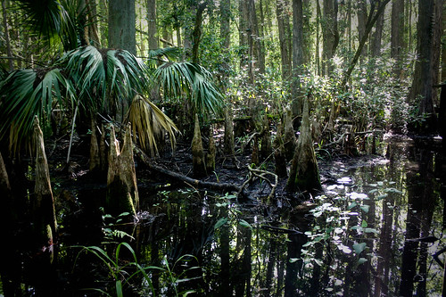 park usa outdoors florida hiking trail swamp northamerica highlandshammockstatepark highlandscounty cypressswamptrail