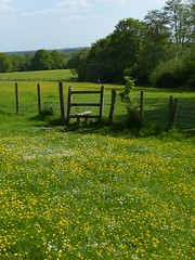 Buttercup stile near Pluckley