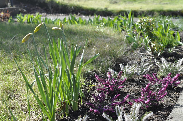 2015-04-05 Easter gardening