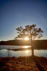 Sunset under a tree