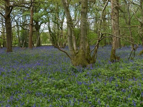 Holt wood, nr Chelsham