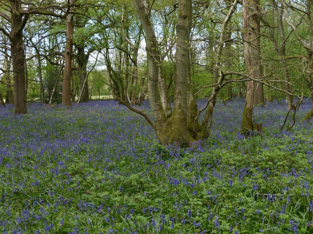 Holt wood, nr Chelsham Whyteleafe to Woldingham walk
