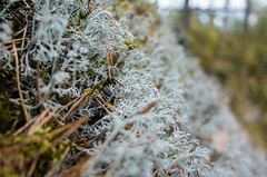 Lichen on a steep slope