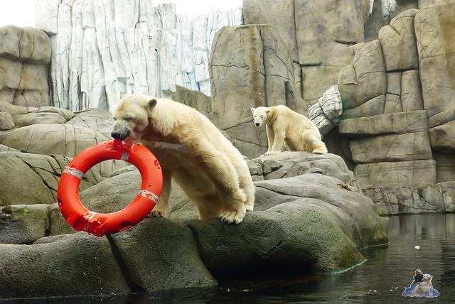 Tierpark Hagenbeck 25.04.2015   144