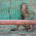 Monkey See by StephensLee