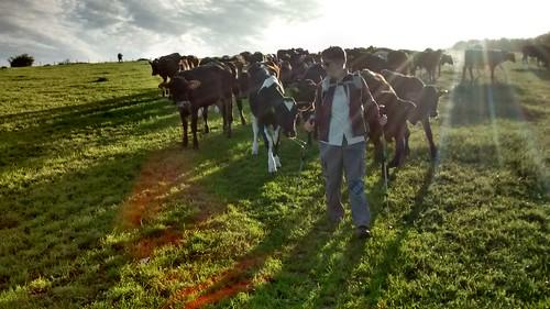 SWC Herdsperson in action