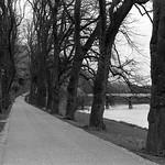 Riverside Walk Avenham Park