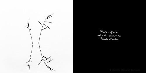 Calligrafie d'Anima (1)