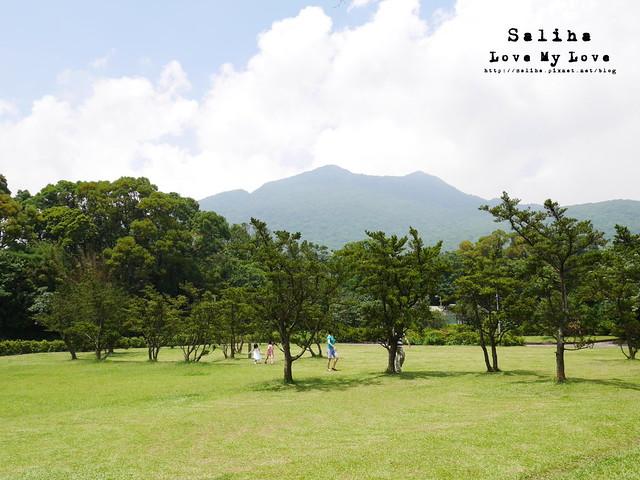 陽明山踏青一日遊景點 第二停車場杜鵑茶花園 (3)