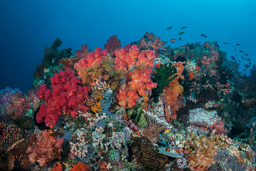 Colorful Sahaung1 reefscape