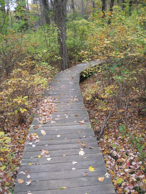 Wooden walkway in autumn