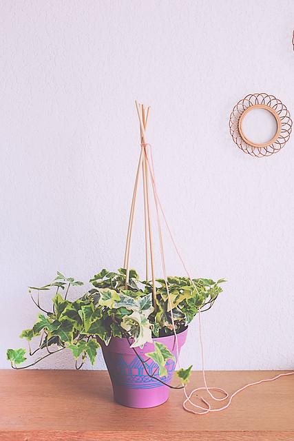 Untitleddiy plante et jardin Lierre