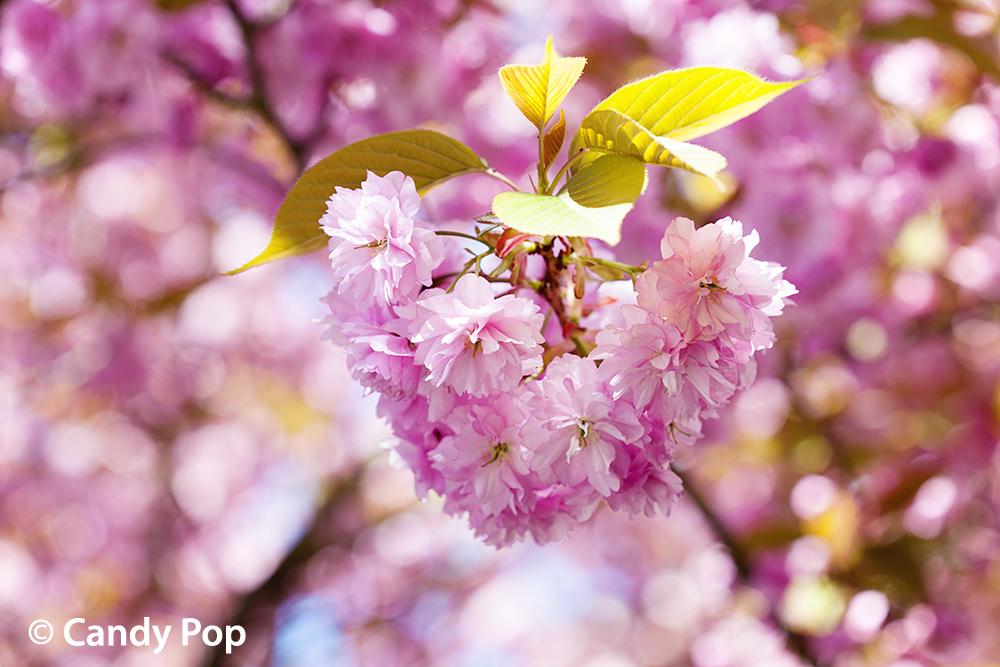 Spring Pastimes