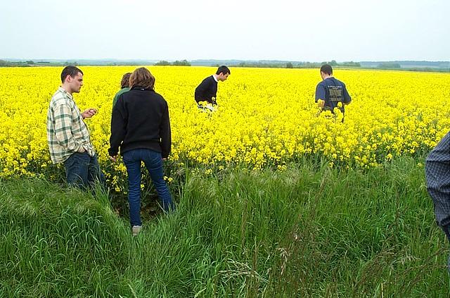 campo de flores amarillas - viaje a los castillos de loira