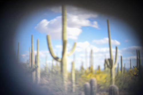 Pinhole photo of Saguaro cactus taken with a Nikon D4S. One-second exposure, aperture unknown.