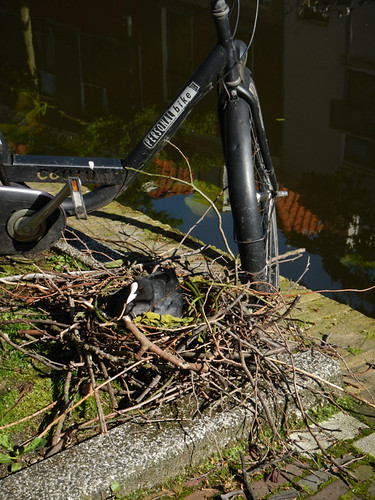 Bird Nest by the Canal in Delft, Holland