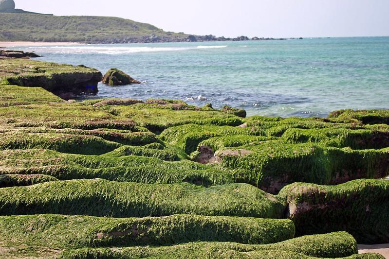 17度C台二線景點-石門-老梅綠石槽 (62)