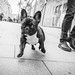 Pug by StreetPeople
