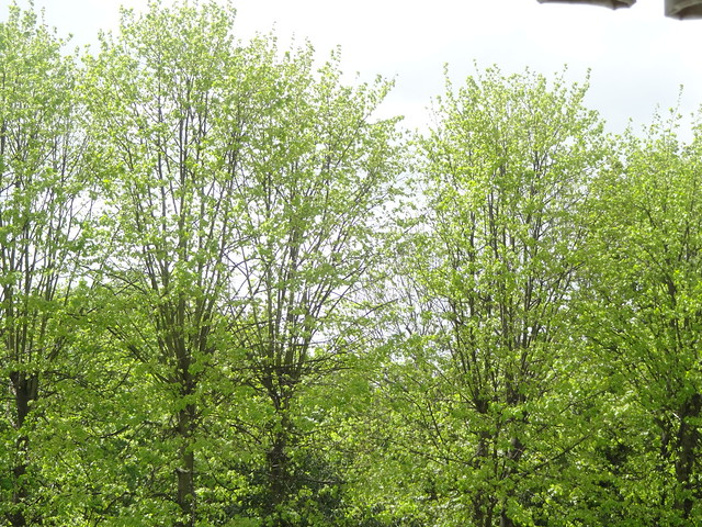 Spring across my window
