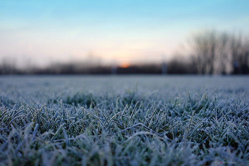 morning mañana grass wales frost cardiff gales cesped pontprennau fujifilmxm1