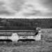Bench guardian by Joerg Schreier