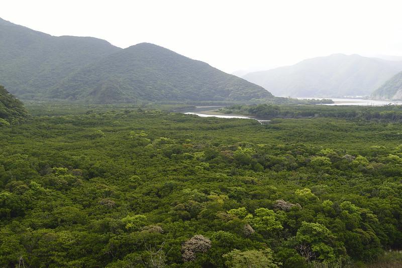 住用地区のマングローブ