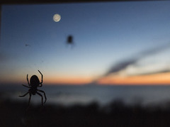 Spiders in sunset (and in moonshine)