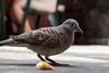 Kona Brew Pub Bird