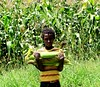 Irrigation improves food security, but must be done fairly