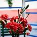 Tête à tête avec les fleurs por WhiteFlowersFade