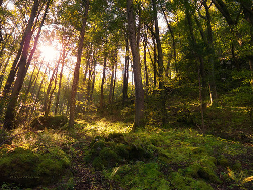 light sun green nature forest lights colorful warm natural vibrant magic bio rays sunlit eco uncultivated sunlitforest