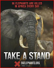 為國際自然保護聯盟「96隻象的警示」活動所作的廣告。(來源:WCS)
