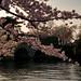 Blossom glint