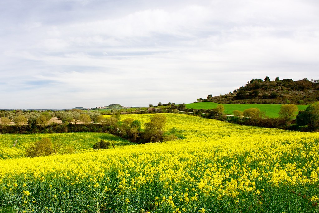 - Yelow fields -