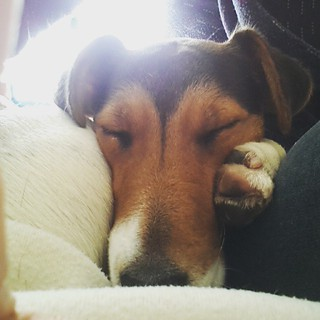 Dur dur, la vie de chien :)