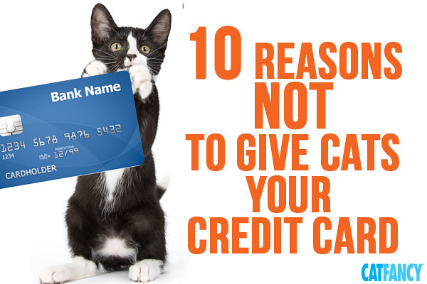 dont-give-cats-credit-card