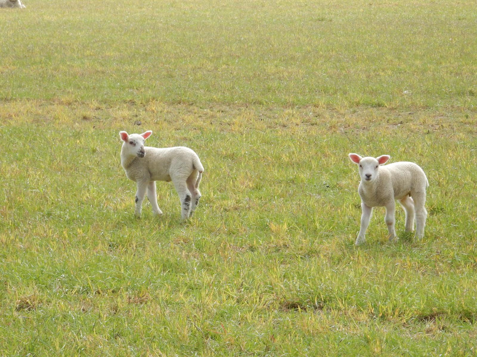 Lambs Baldock Circular