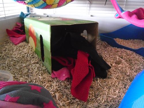 Apple Juice box in rat cage