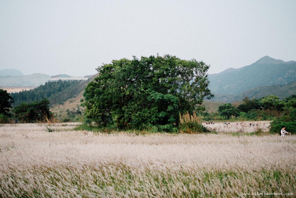 Untitled 白茅草 踩單車就是可以找到這樣的仙境﹣白茅草失樂園 16663948434 4b3952975a o