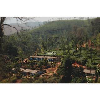 Beautiful tea estate in wayanad. One of my favourite spots.