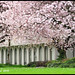 We Will Miss The Blossoms Season - Vanier Park N16721e by Harris Hui (in search of light)
