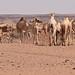 Naqa, Sudan by pompeii79