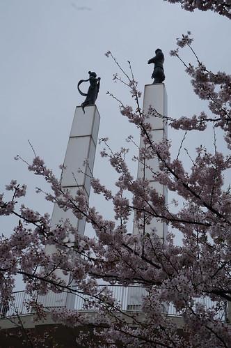 5_太田山公園の桜_1