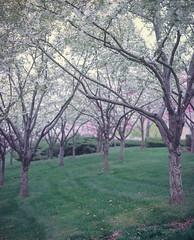 Spring in KC