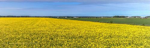 summer field finland nokia kesä n95 pelto laihia keltainen yewllow rypsi