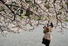 Photo:20150404 Kyoto Imperial Palace Park 8 By BONGURI