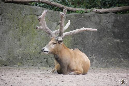 Zoo Berlin 26.04.201563