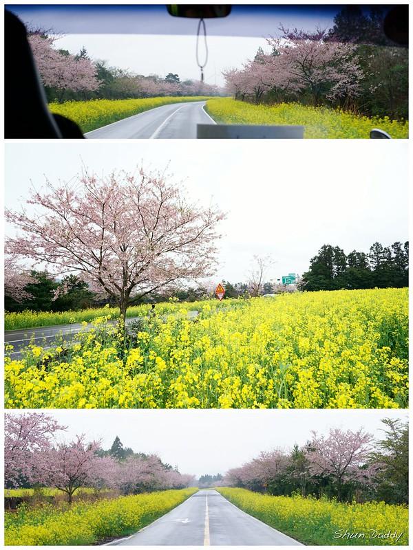 Sakura Road