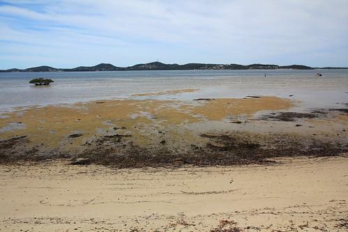 Beach at Curlew Avenue, South Pindimar near Tea Gardens 17.4.15